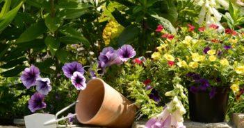 Blumen, Harke und Blumentopf stehen auf einer Steinmauer